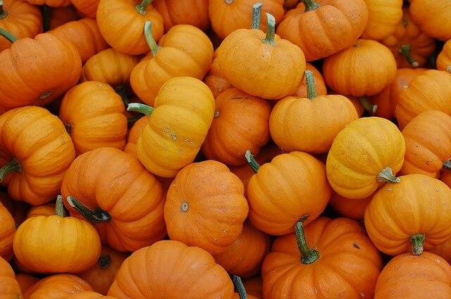 Pumpkin Singapore